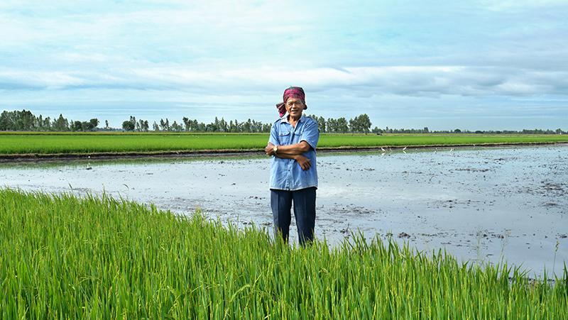 ชาวนาเมืองสุพรรณ เกษตรกรวัยเก๋า หัวสมัยใหม่เปิดใจเรียนรู้