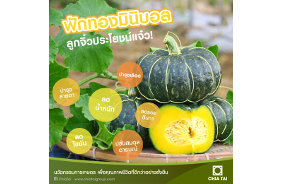 Pumpkin, the orange and yellow color vegetables, is rich in vitamins, minerals,